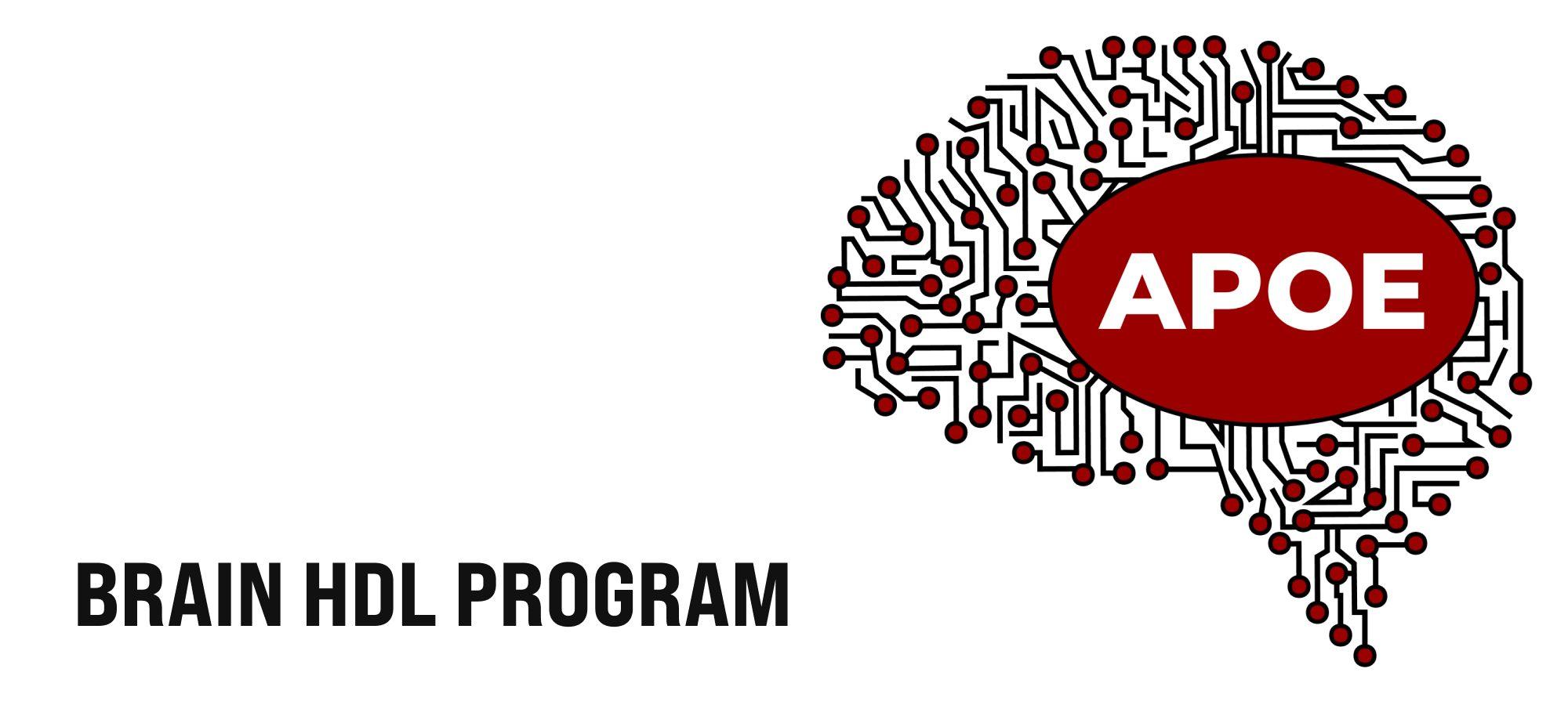 Brain HDL Program large